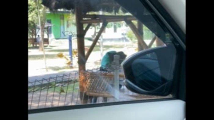 Viral Video Muda Mudi Berbuat Asusila di Taman, Aksinya Direkam Pengendara Mobil, Simak Kronologinya