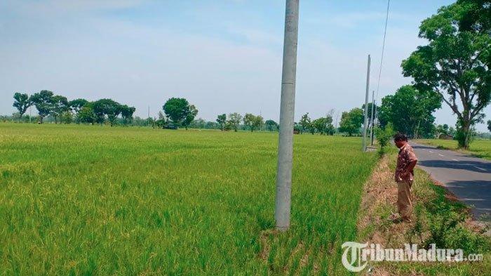 Petani di Madiun Mengamuk, Dapati Lahan Sawahnya DipasangTiang Listrik Milik PLN Tanpa Izin