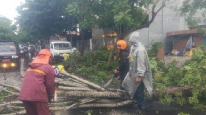 Tim Reaksi Cepat BPBD Bangkalan, agen Bencana BPBD Provinsi Jatim, Satpol PP, hingga personel Dinas Lingkungan Hidup mengevakuasi tiga pohon  tumbang yang menimpa ruas Jalan KH Moh Holil, Jumat (20/11/2020)