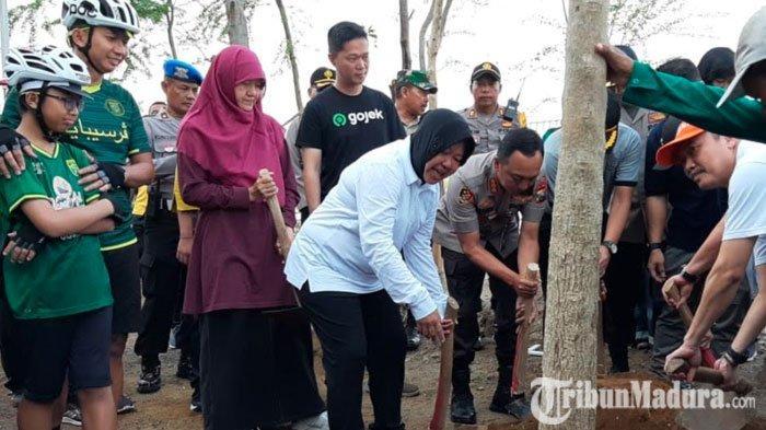 Wali Kota Risma Pimpin Langsung Aksi Tanam Pohon di Sekitar Stadion GBT, Menanam Pohon Tabebuya