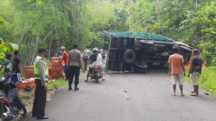 BREAKING NEWS - Truk Terguling di Jalan Sawoo-Tumpakpelem Ponorogo, Muatan Ayam Berhamburan ke Jalan