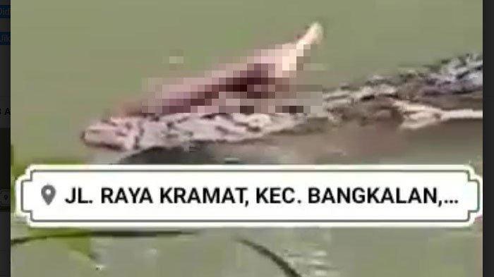 HOAKS Video Buaya Makan Manusia di Sungai Desa Kramat Bangkalan Madura, Begini Kata Polisi