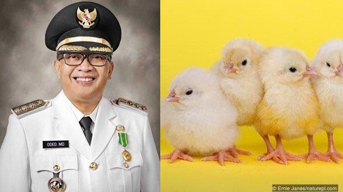 Demi Warganya Tak Kecanduan Gadget, Wali Kota Bandung Bikin Program Pemberian Anak Ayam untuk Bocah