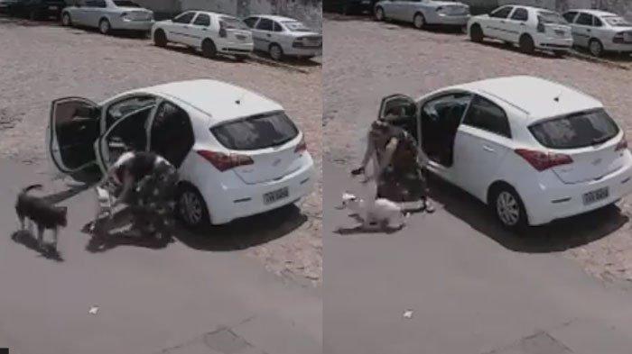 Video Wanita Buang Anjing Berkaki Duadi Jalan, Sempat Dorong Peliharaan hingga Tersungkur ke Aspal