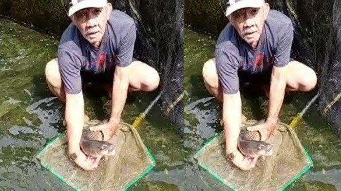 Ikan Dewa, Sarat akan Mitos dan Legenda, Harga Satu Kg Bisa Mencapai Rp 1 Juta, Kaya Manfaat