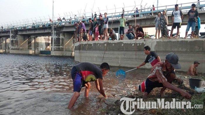 Hujan Deras Mengguyur, Ikan di Bengawan Solo pada Mabok & Membawa Berkah Ribuan Warga Pinggir Sungai