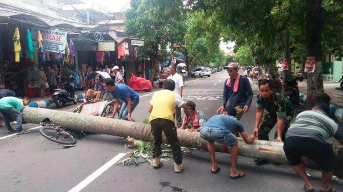 Tukang Becak Tertimpa Pohon Palem Setinggi 8 Meter Sampai Becaknya Hancur, Begini Keadaan Korbannya