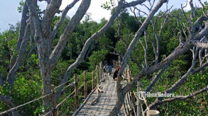 Mengintip Indahnya Wisata Bakau Labuhan Manis, Wisata Edukasi Hutan Mangrove di Desa Labuhan Sampang