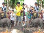 babi-hutan-jinak-di-desa-karang-waru-kecamatan-rupit-kabupaten-musi-rawas-utara-muratara.jpg