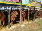 bazar-hewan-kurban-murah-di-lapangan-desa-samatan.jpg