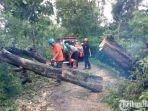 bpbd-pamekasan-dibantu-warga-setempat-saat-memotong-pohon-asam-yang-tumbang.jpg