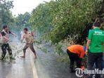 bpbd-pamekasan-sedang-mengevakuasi-pohon-tumbang.jpg