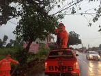 dinas-lingkungan-kabupaten-bangkalan-mengevakuasi-pohon-tumbang-di-tiga-titik-pohon-tumbang.jpg