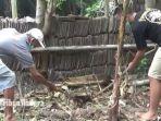 dua-orang-warga-desa-klampak-arum-kecamatan-tekung-lumajang-kerja-bakti-ular-kobra.jpg