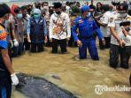 gubernur-jawa-timur-khofifah-indar-parawansa-mengunjungi-lokasi-puluhan-ikan-paus-terdampar.jpg