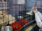hewan-peliharaan-di-pradika-rabbit-pet-shop-vet-care.jpg