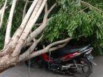 honda-supra-x-125-tertimpa-pohon-ketika-melintas-di-jalan-raya-bancaran-kecamatan-kota-bangkalan.jpg