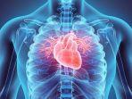 ilustrasi-jantung-2.jpg