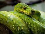 ilustrasi-ular-tribunners-pernah-mimpi-bertemu-dengan-ular.jpg