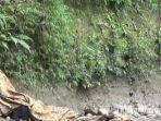 kakek-pikun-di-jurang-sedalam-15-meter-di-desa-ngaglik-kecamatan-parang-kabupaten-magetan.jpg