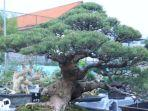 kampung-bonsai-gresik.jpg