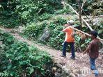 kawasan-hutan-durian-terluas-di-kecamatan-watulimo.jpg