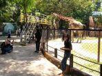 kebun-binatang-surabaya-kbs-senin-11102021.jpg