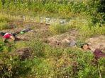 korban-ditemukan-tergeletak-di-sawah-miliknya-di-desa-tambahrejo.jpg