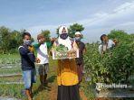 panen-raya-perdana-tanaman-tomat-dan-koll-di-lahan-demplot-holtikultura-bangkalan.jpg