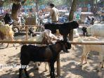 pasar-kambing-di-kecamatan-ngadiluwih-kediri-1472021-harga-kambing-hewan-kurban-idul-adha.jpg