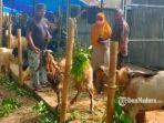 pedagang-hewan-kurban-di-jalan-raya-urip-sumoharjo-kabupaten-sumenep.jpg