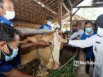 pelayanan-kesehatan-keliling-untuk-hewan-ternak.jpg