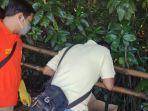 penemuan-mayat-bayi-di-ekowisata-mangrove-wonorejo.jpg