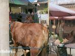 penyembelihan-sapi-hewan-kurban-yang-sempat-terlepas-dan-kabur-masuk-rumah-makan.jpg