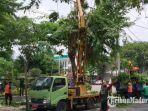 personel-pln-up3-pamekasan-madura-saat-melakukan-pemangkasan-pohon.jpg