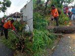 personel-supervisor-pusdal-ops-bpbd-pamekasan-mengevakuasi-pohon-tumbang-di-desa-laden.jpg