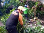 petugas-membersihkan-pohon-tumbang-di-jember.jpg
