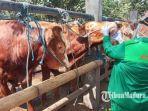 petugas-memeriksa-kondisi-kesehatan-sapi-yang-dijual-di-pasar-hewan-dimoro.jpg