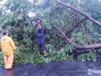 pohon-tumbang-di-kecamatan-mulyorejo-surabaya.jpg