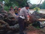 pohon-tumbang-di-kecamatan-widang-kabupaten-tuban.jpg
