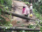 pohon-tumbang-di-salah-desa-di-pamekasan-saat-terjadi-musim-hujan.jpg