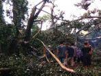 pohon-tumbang-di-sumber-jimput-kelurahan-rejomulyo-kota-kediri-menewaskan-seorang-mahasiswa.jpg