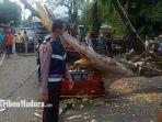 pohon-tumbang-menimpa-sebuah-mobil-toyota-calya-saat-melintas-di-bangkalan.jpg