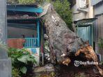 pohon-tumbang-yang-terjadi-di-jalan-husni-malang.jpg