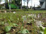 sawah-milik-petani-yang-ditanami-tembakau-tergenang-air-di-jalan-jamaluddin-sampang.jpg