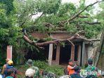 sebuah-pohon-tumbang-dan-menimpa-rumah-warga.jpg