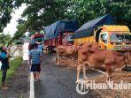 sejumlah-kendaraan-terjebak-di-jalan-raya-akibat-banjir.jpg