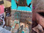 sejumlah-rumah-di-desa-purwodadi-kecamatan-tirtoyudo-kabupaten-malang-rusak-akibat-gempa.jpg