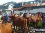 suasana-pasar-hewan-ternak-sapi-di-desa-batubintang.jpg
