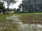 tanaman-tembakau-digenangi-air-di-jalan-jamaluddin-kabupaten-sampang-madura.jpg